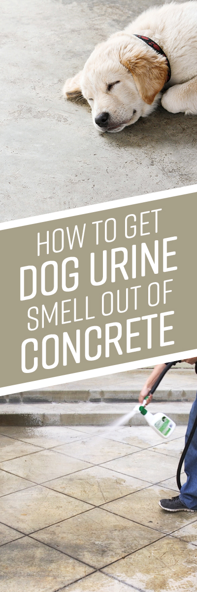 How To Get Urine Smell Out Of Concrete Simple Green