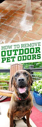 How To Remove Outdoor Pet Odor Simple Green