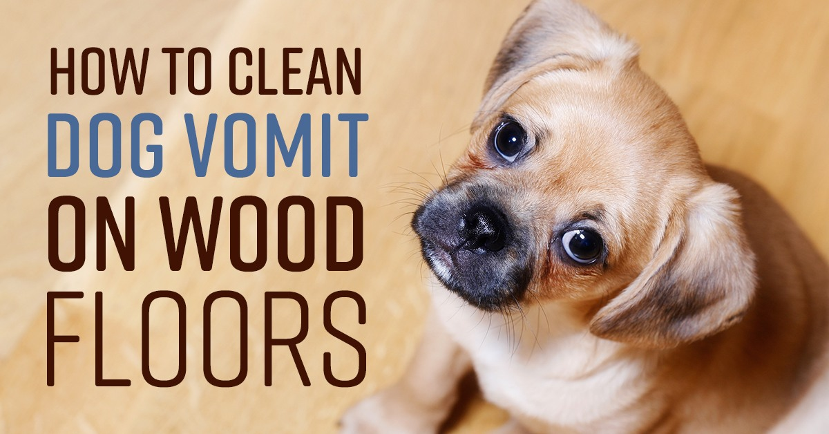 How To Clean Dog Vomit On Wood Floors Simple Green