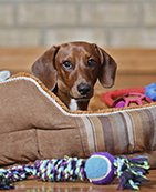 How to Clean Fabric Pet Carriers