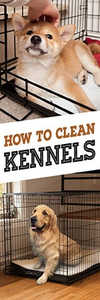 How to Clean a Kennel (Plastic)